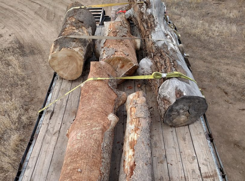 Old Logs strapped on a trailer